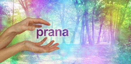 Photo pour Femelle de mains avec le Prana mot flottant entre devant une scène boisé magique de l'effet bokeh couleur arc-en-ciel éthérée et l'espace de copie - image libre de droit