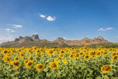 Summer landscape: beauty sunset over sunflowers field with warm light and mountain