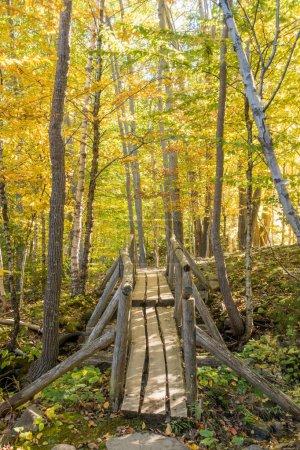 Photo pour Couleurs d'automne magnifiques du Parc National d'Acadia Maine USA - image libre de droit