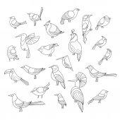 Birds set Lined vector collextion