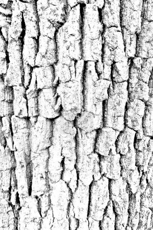 Photo for Abstract background. Monochrome texture. Black and white textured background - Royalty Free Image