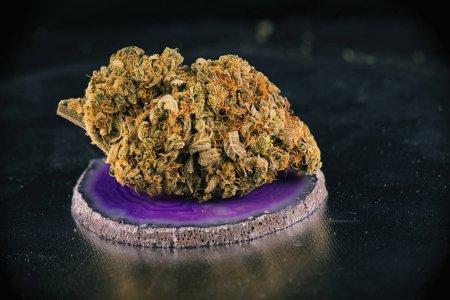 Single cannabis bud (sunshine daydream marijuana strain)