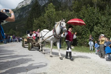 Bohinj cow ball and festival.
