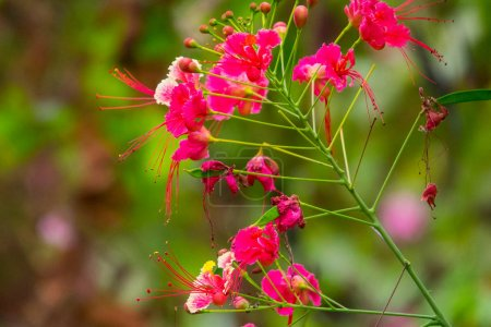 Colourful flower blossoms in a garden....