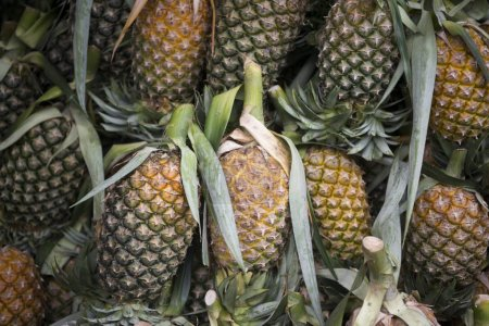 Pineapples at the Food Market in the town of Nong Khai