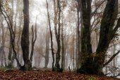 Beautiful autumnal forest with fog, moss and red leaves