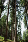 Beautiful Forest trees. nature green wood sunlight backgrounds