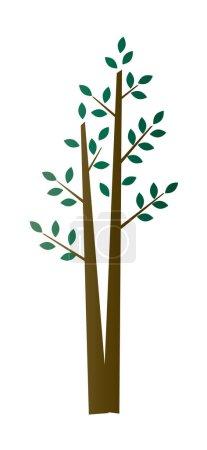 aspen birch tree