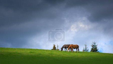 Pareja de caballos pastando en las montañas en el fondo del cielo oscuro tormentoso .