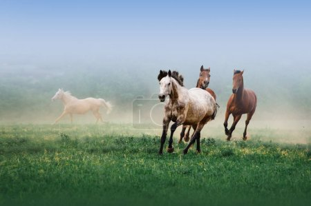 A herd of horses galloping in the mist on a neutral background on the green grass