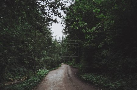 The road in the dark deciduous forest on a cloudy rainy day