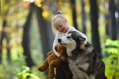 Child play with dog in autumn forest. Child with husky and teddy bear on fresh air outdoor