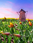 Beautiful spring landscape with fabulous beds of flowers and win