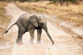 elephant calf crossing a gravel road