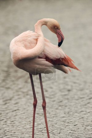 Lonely Pink Flamingo, matte style