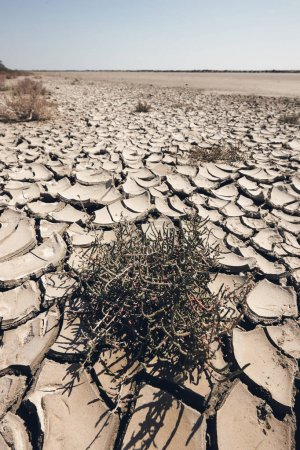 arid and waste land, matte style