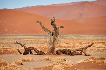 Dead tree in the desert.