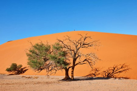 Beautiful landscape in the Namib desert with some ...