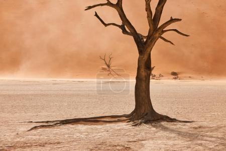 Photo pour Beau paysage dans le désert namibien à Deadvlei avec de vieux arbres morts . - image libre de droit