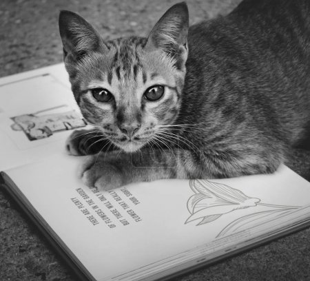 Cat Playing with Book