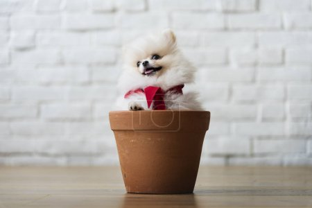 Dog sitting in pot