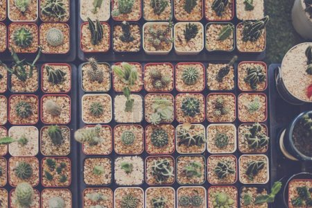 Cactuses Collection background