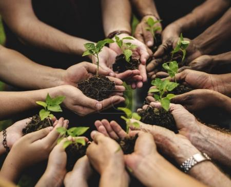 Photo for Group of Hands holding sprouts of trees, original photoset - Royalty Free Image