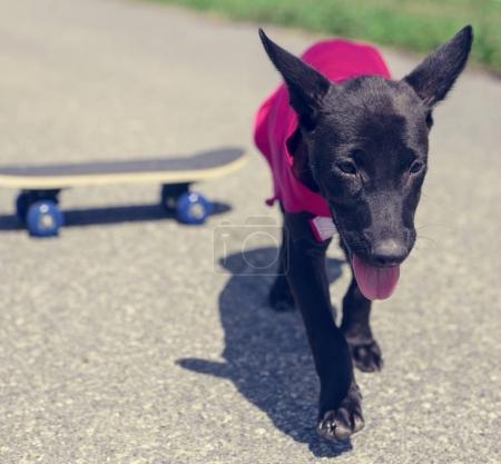 little dog walking on road