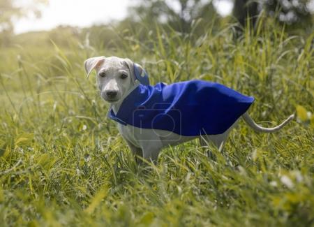 cute dog in costume