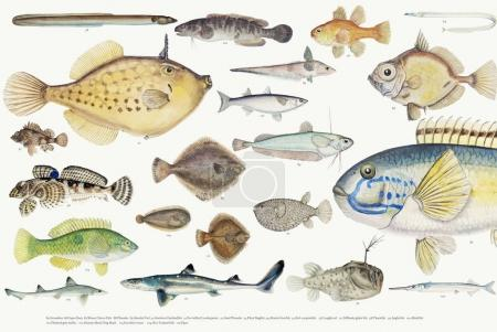 Colored  illustration of fishes drawing collection