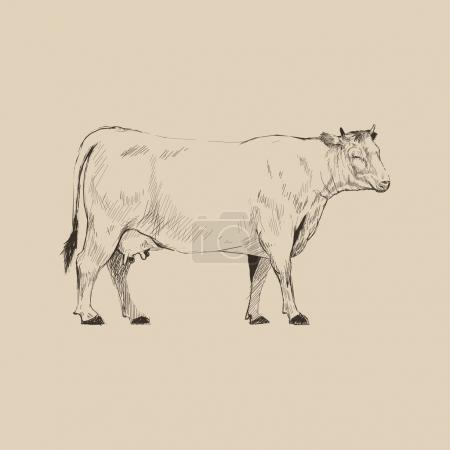 Illustration drawing style of cow