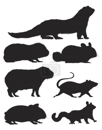 Illustration drawing style of rats collection