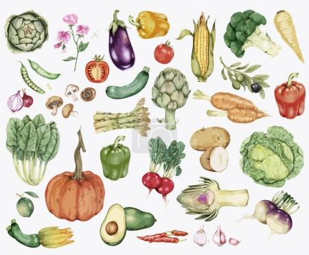 Illustration of Hand drawn vegetables collection