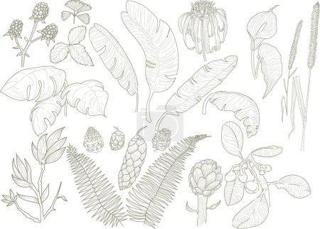 artwork of botanic flower leaves