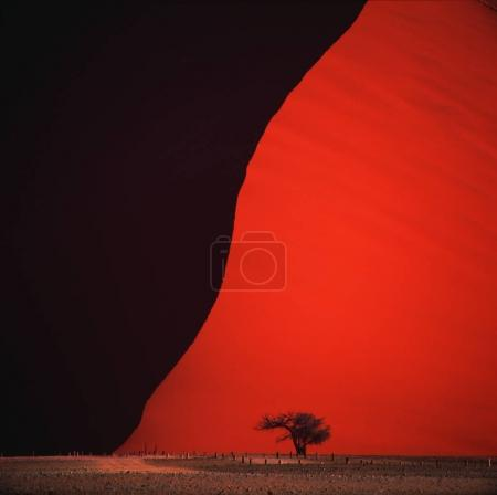silhouette of lonely tree in desert