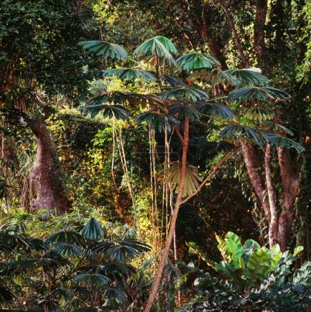 tropical trees in rainforest