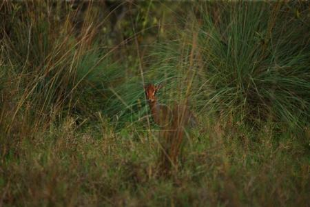 Photo for Cute little deer standing in tall grass - Royalty Free Image