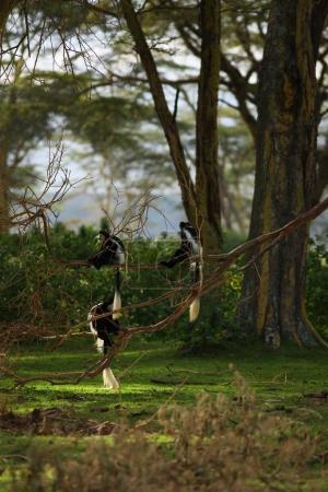 little monkeys sitting on branch