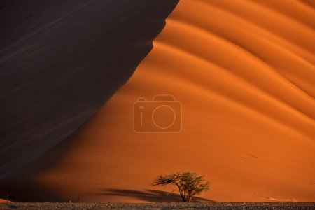 Colorful landscape of Namib desert with tree under biggest dune