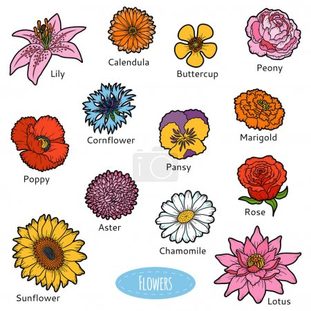 Illustration for Vector set of flowers, color nature stickers - Royalty Free Image