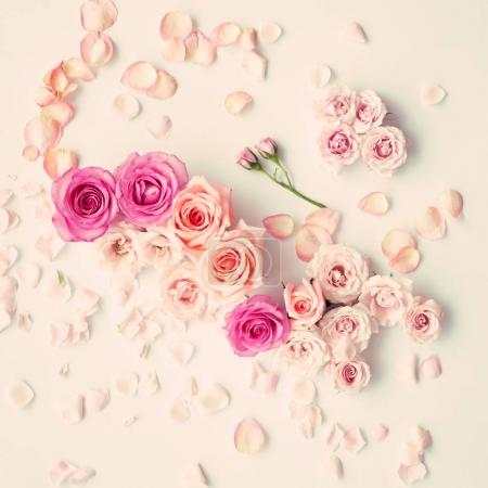 Photo pour Roses et pétales roses et pourpres dans une couche plate - image libre de droit