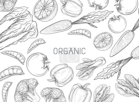 Illustration for Healthy Vegetables Frame. Linear graphic. Vector illustration - Royalty Free Image
