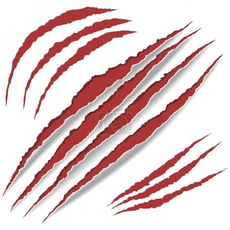 Animal Claws scratches. vector