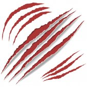 Animal Claws scratches vector