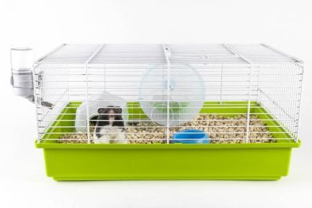 Foto de Hamster divertido mirando fuera de su jaula en fondo blanco - Imagen libre de derechos