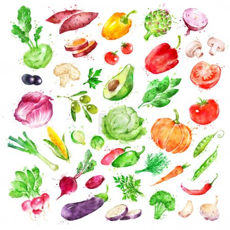 Photo for Hand drawn watercolor illustration set of vegetables with paint splashes. - Royalty Free Image
