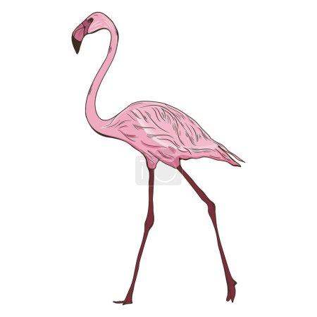 Hand drawn illustration with flamingo