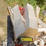 Log splitter machine splitting a birch log...