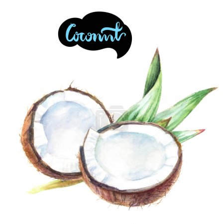 Coconut cut with leaves