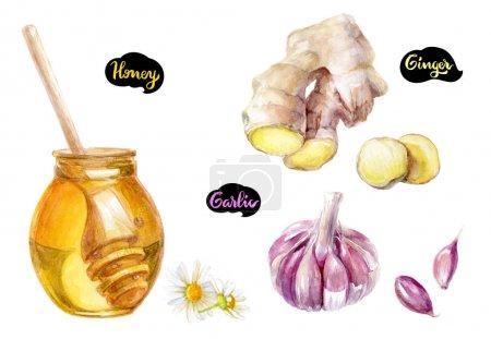 Honey dipper illustration